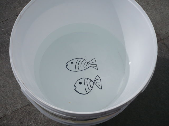Nachtvissen